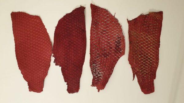 Fiskskinn, Tilapia